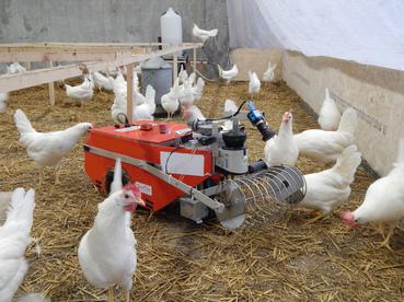 Egg collection robot