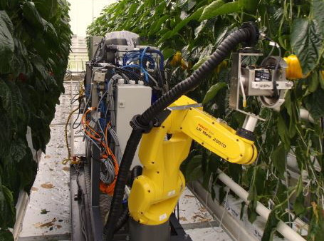 Sweet pepper harvesting robot